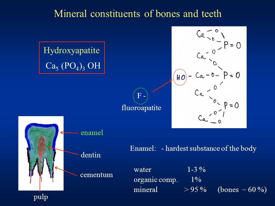 Mineral constituents of bones and teeth enamel dentin cementum pulp Enamel: - hardest substance of the body water 1-3 % organic comp. 1% mineral > 95