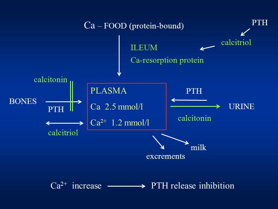 Ca 2+ increase PTH release inhibition Ca – FOOD (protein-bound) ILEUM Ca-resorption protein PLASMA Ca 2.5 mmol/l Ca 2+ 1.2 mmol/l URINE BONES PTH calcitonin calcitriol milk excrements