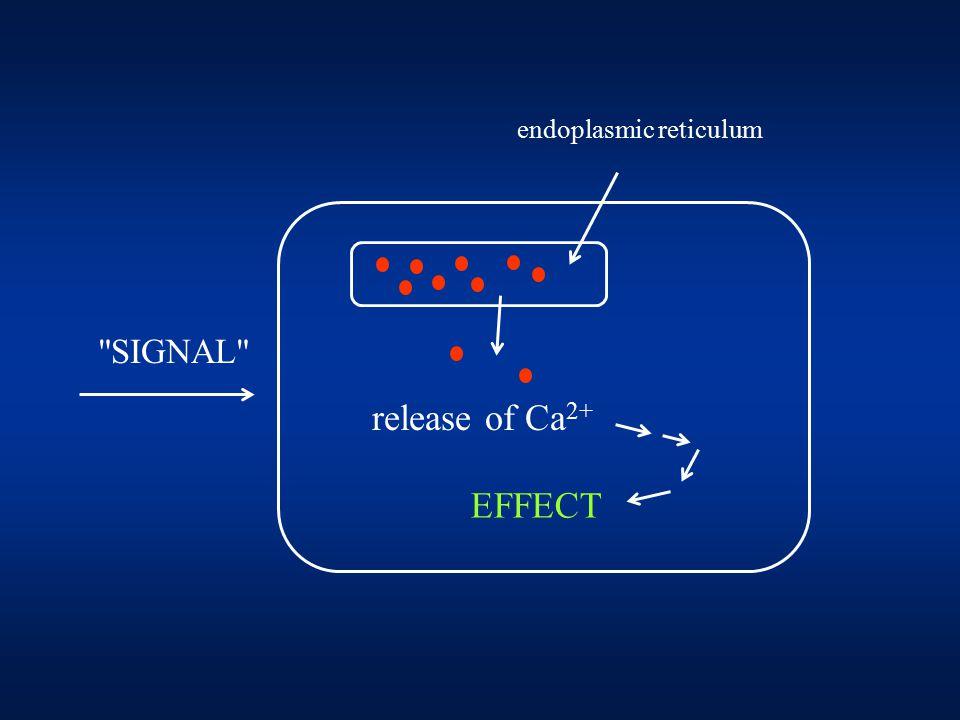 SIGNAL release of Ca 2+ EFFECT endoplasmic reticulum