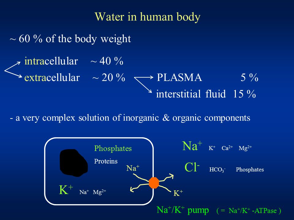 Water in human body ~ 60 % of the body weight intracellular ~ 40 % extracellular ~ 20 % PLASMA 5 % interstitial fluid 15 % - a very complex solution o
