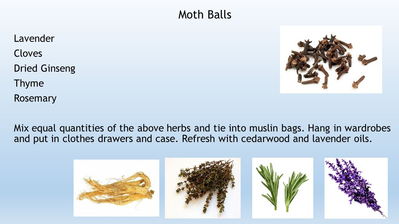 Moth Balls Lavender Cloves Dried Ginseng Thyme Rosemary Mix equal quantities of the above herbs and tie into muslin bags.