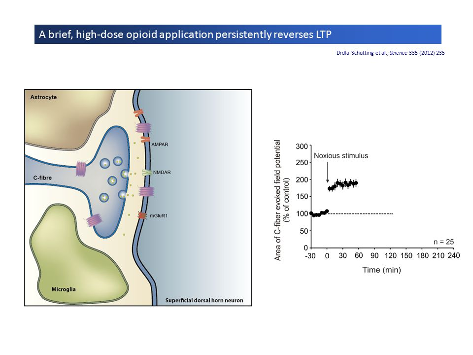 A brief, high-dose opioid application persistently reverses LTP Drdla-Schutting et al., Science 335 (2012) 235