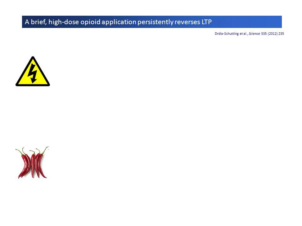 Mechanisms of LTP reversal by opioids Drdla-Schutting et al., Science 335 (2012) 235