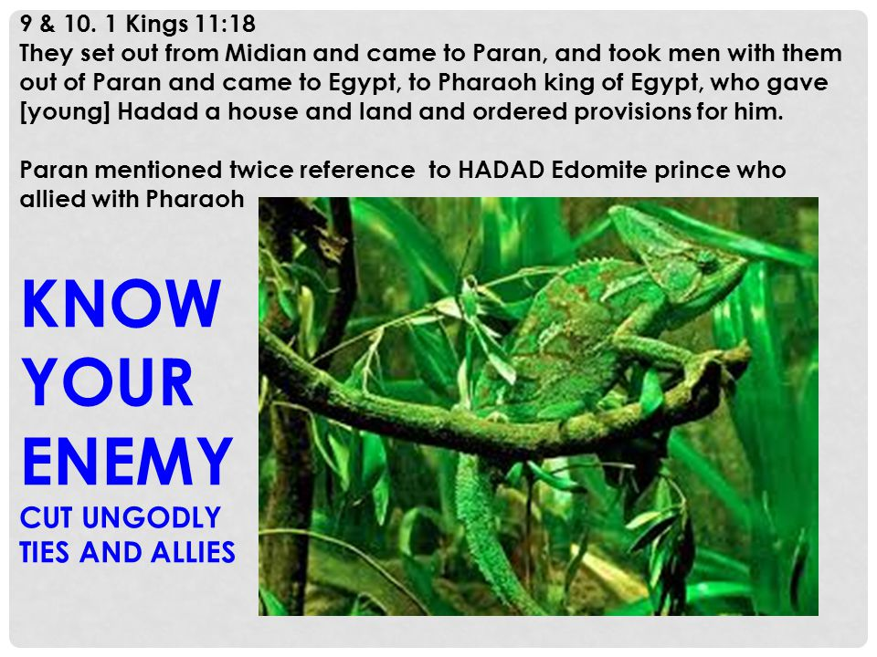 9 & 10. 1 Kings 11:18 They set out from Midian and came to Paran, and took men with them out of Paran and came to Egypt, to Pharaoh king of Egypt, who