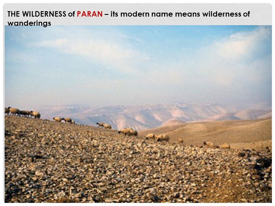 THE WILDERNESS of PARAN – its modern name means wilderness of wanderings