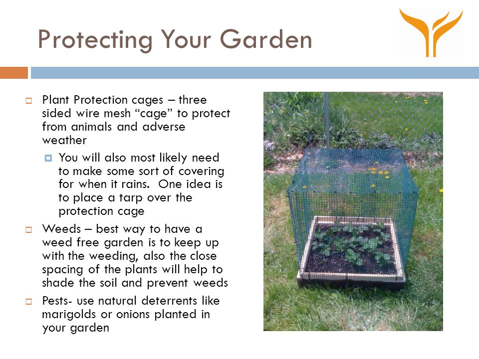 Protecting Your Garden  Plant Protection cages – three sided wire mesh cage to protect from animals and adverse weather  You will also most likely need to make some sort of covering for when it rains.