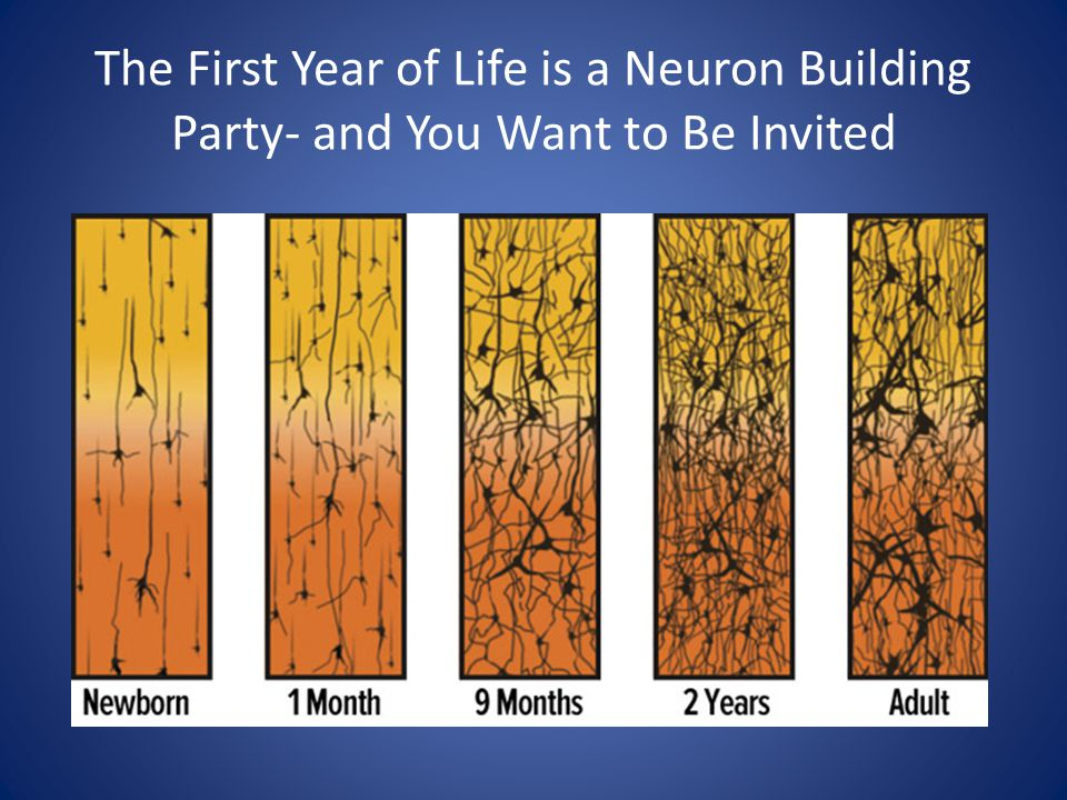 The First Year of Life is a Neuron Building Party- and You Want to Be Invited