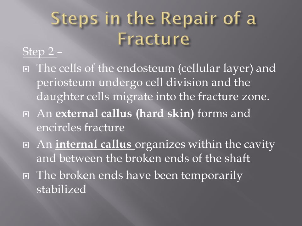 Step 3 –  Osteoblasts (bone building cells) replace the central cartilage of the external callus with spongy bone  Calluses form a brace at the fracture site  Spongy bone now unites the broken ends  Fragments of dead bone are removed and replaced  If the fracture required a cast, it can be removed at this stage