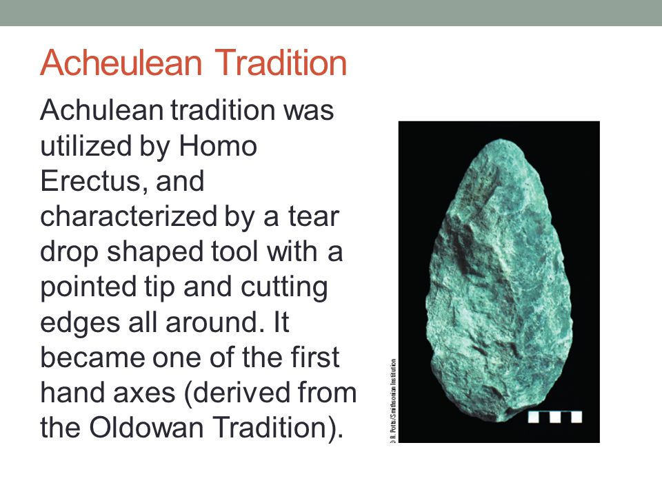Acheulean Tradition Achulean tradition was utilized by Homo Erectus, and characterized by a tear drop shaped tool with a pointed tip and cutting edges all around.