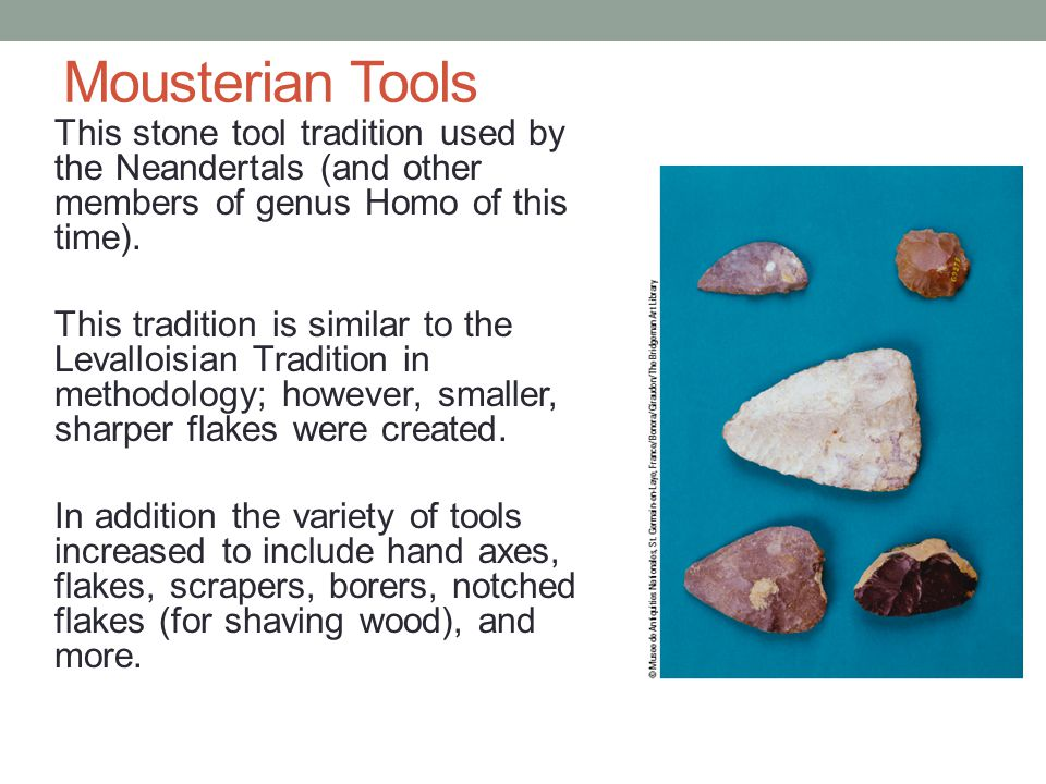 Mousterian Tools This stone tool tradition used by the Neandertals (and other members of genus Homo of this time).