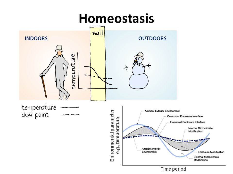 INDOORSOUTDOORS Homeostasis Enironmental parameter e.g., temperature Time period