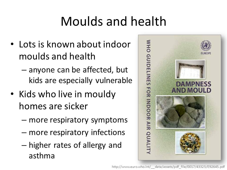 Moulds and health Lots is known about indoor moulds and health – anyone can be affected, but kids are especially vulnerable Kids who live in mouldy homes are sicker – more respiratory symptoms – more respiratory infections – higher rates of allergy and asthma http://www.euro.who.int/__data/assets/pdf_file/0017/43325/E92645.pdf