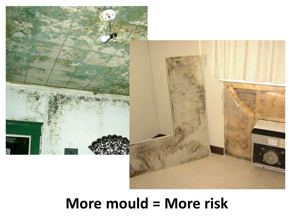More mould = More risk