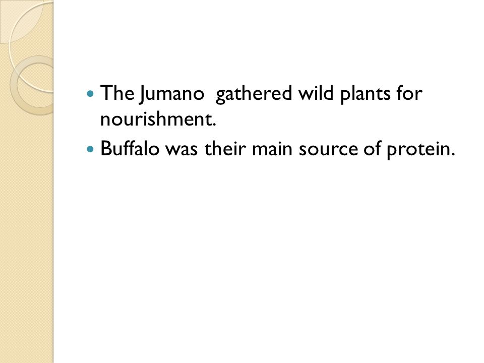 The Jumano gathered wild plants for nourishment. Buffalo was their main source of protein.
