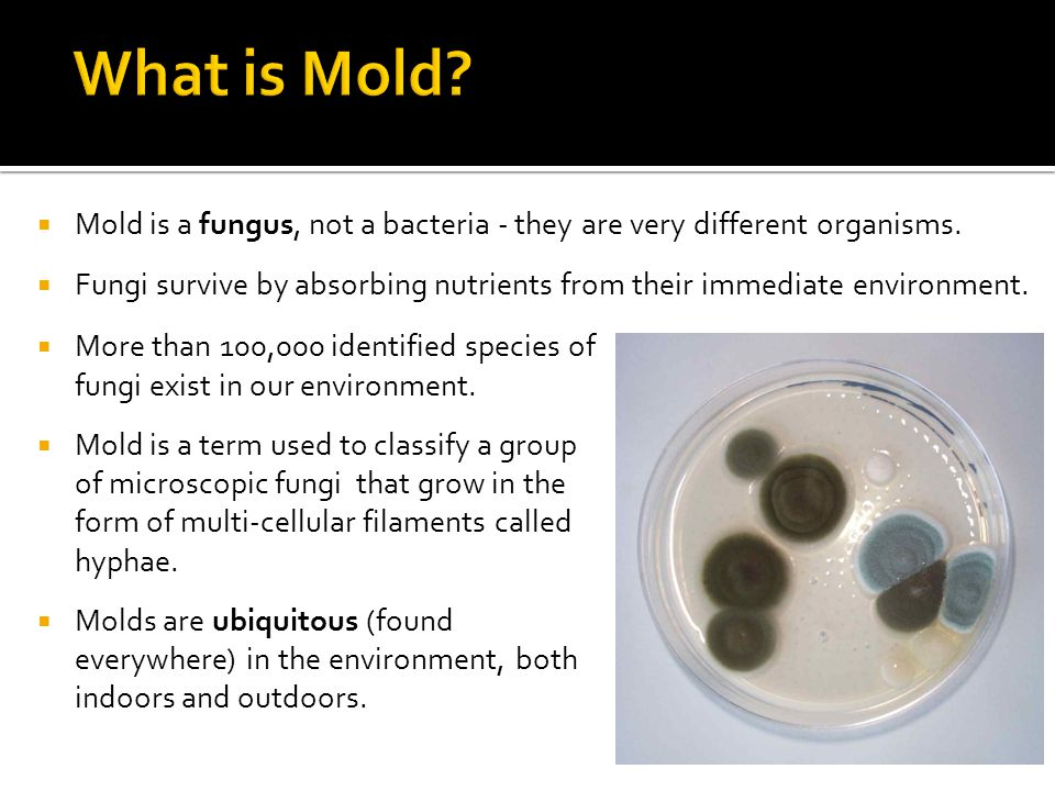  Mold is a fungus, not a bacteria - they are very different organisms.  Fungi survive by absorbing nutrients from their immediate environment.  Mor