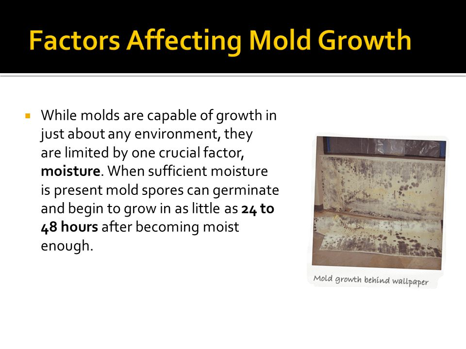 Lumberyard Mold  Lumberyard mold is the black staining commonly seen on lumber during the construction processes or on stacks of lumber in lumber yards.