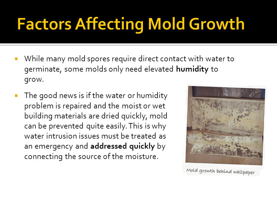  The good news is if the water or humidity problem is repaired and the moist or wet building materials are dried quickly, mold can be prevented quite