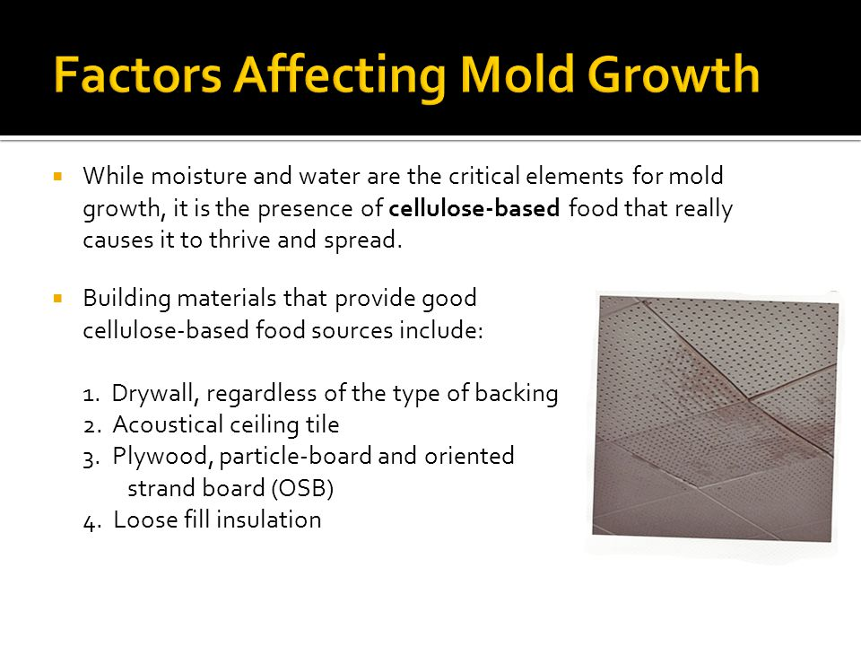 Exterior – Landscape Issues Intruding moisture may raise the relative humidity of the building, also encouraging mold growth.