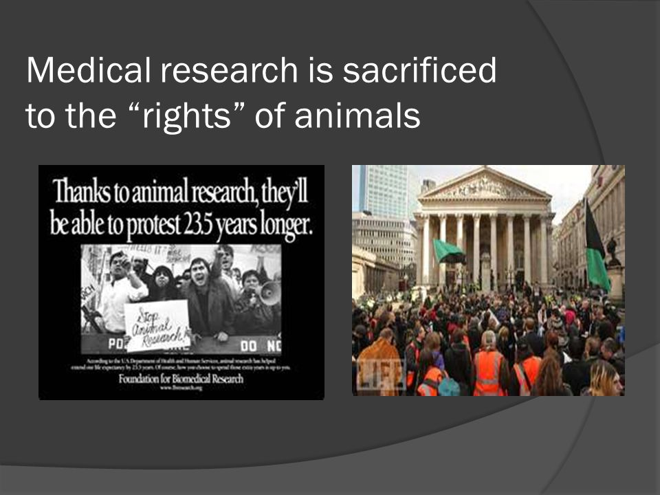 Medical research is sacrificed to the rights of animals