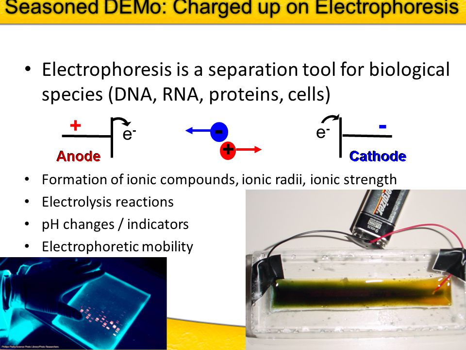 ITEST 2011 - 18 Electrophoresis is a separation tool for biological species (DNA, RNA, proteins, cells) Formation of ionic compounds, ionic radii, ionic strength Electrolysis reactions pH changes / indicators Electrophoretic mobility + - e-e- e-e- - + Anode Cathode Seasoned DEMo: Charged up on Electrophoresis