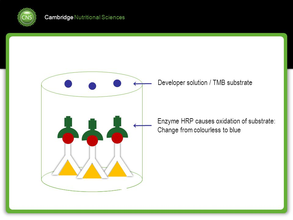 Cambridge Nutritional Sciences Developer solution / TMB substrate Enzyme HRP causes oxidation of substrate: Change from colourless to blue