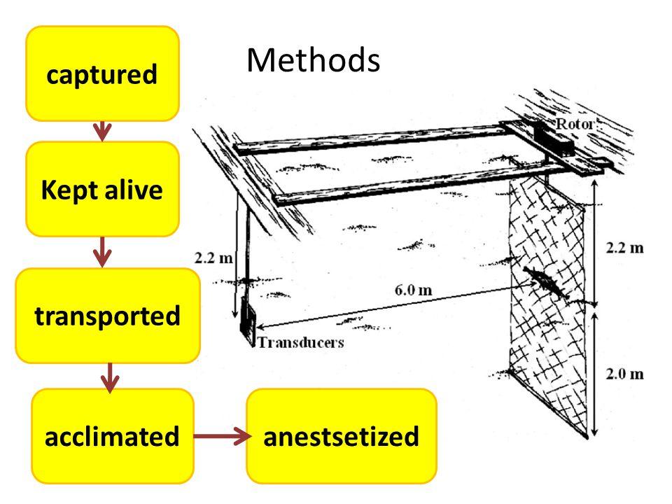 Methods anestsetizedacclimated transported Kept alive captured