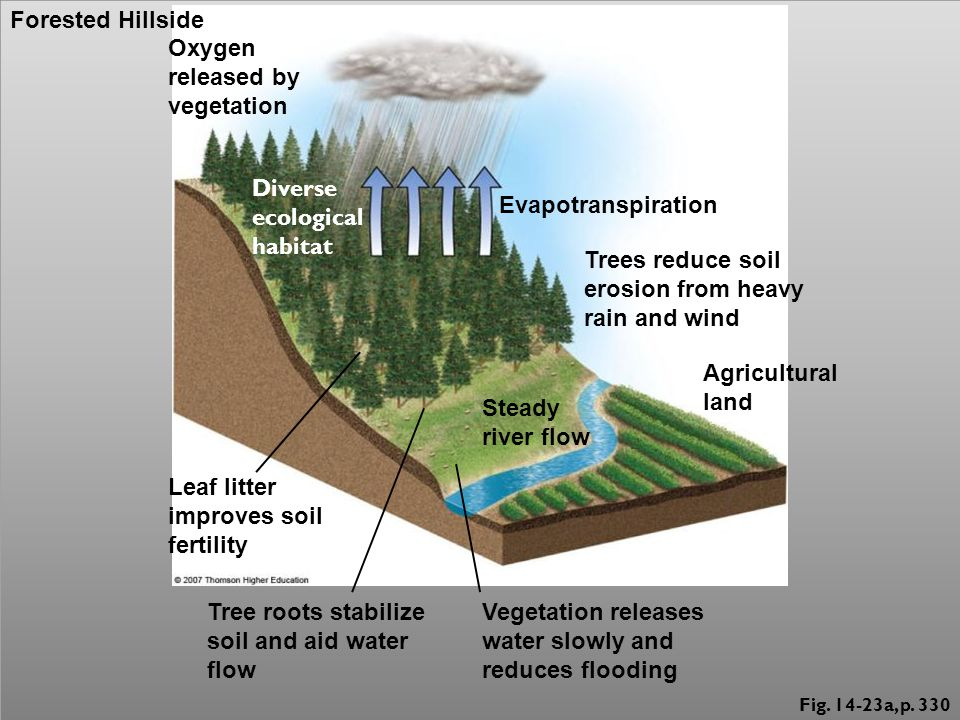 Fig. 14-23a, p. 330 Oxygen released by vegetation Diverse ecological habitat Evapotranspiration Trees reduce soil erosion from heavy rain and wind Agr