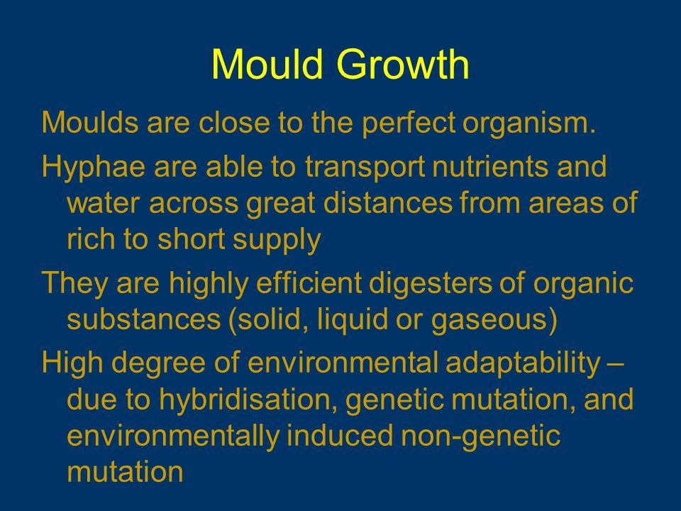 Mould Growth Moulds are close to the perfect organism.
