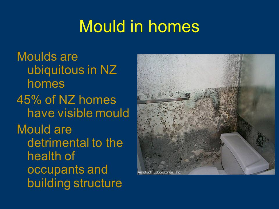 Mould in homes Moulds are ubiquitous in NZ homes 45% of NZ homes have visible mould Mould are detrimental to the health of occupants and building structure