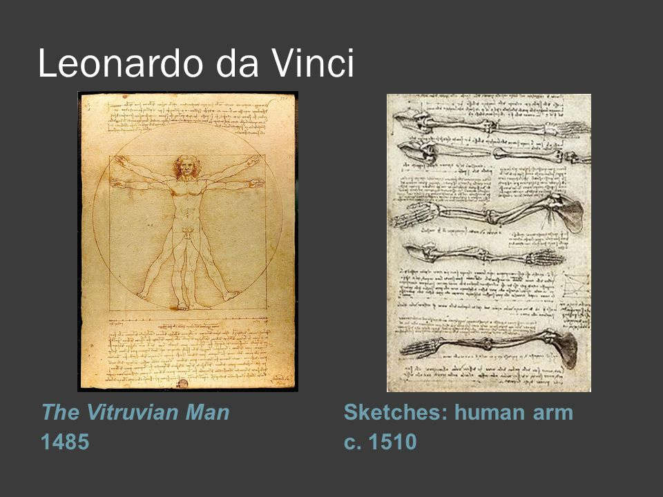 Leonardo da Vinci The Vitruvian Man 1485 Sketches: human arm c. 1510