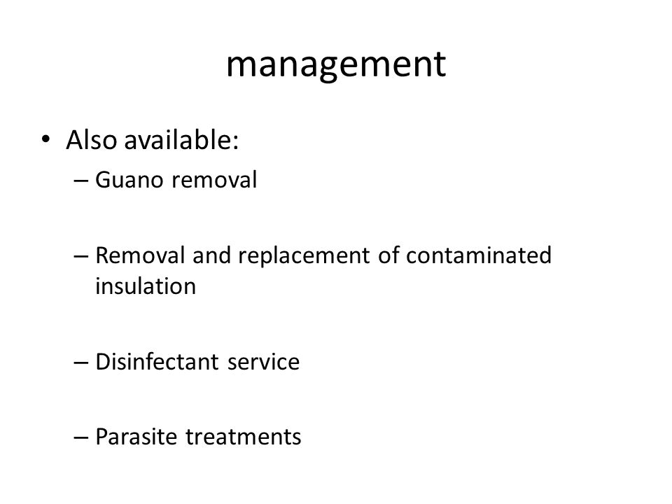 management Also available: – Guano removal – Removal and replacement of contaminated insulation – Disinfectant service – Parasite treatments
