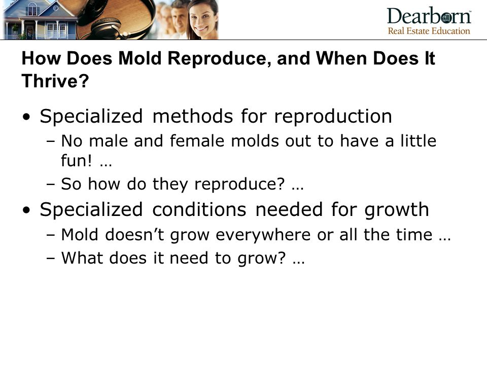 How Does Mold Reproduce, and When Does It Thrive.