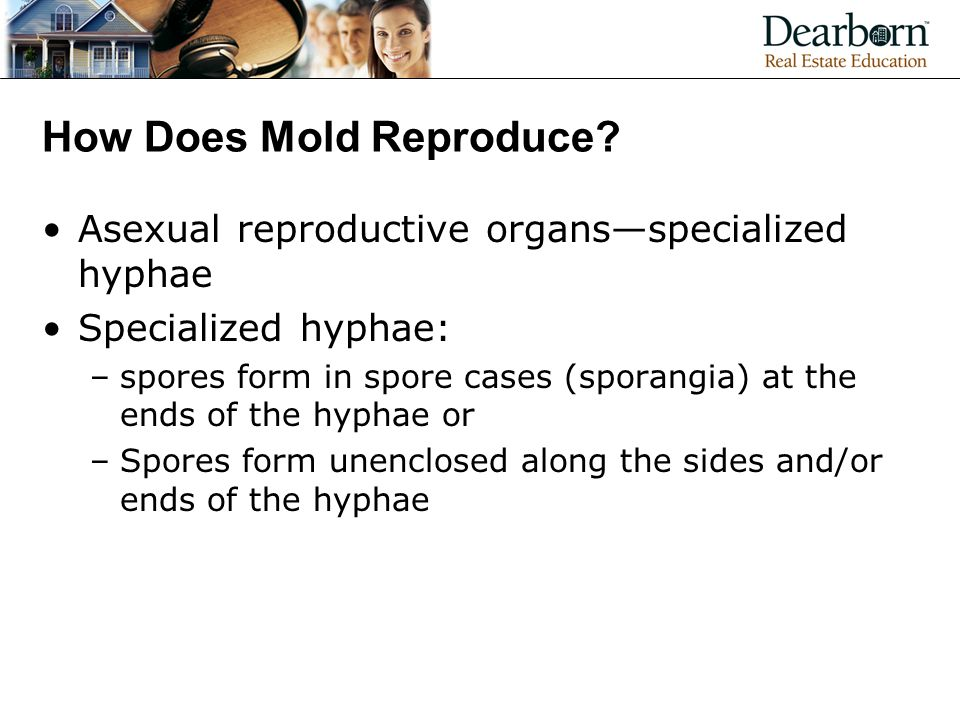 How Does Mold Reproduce.