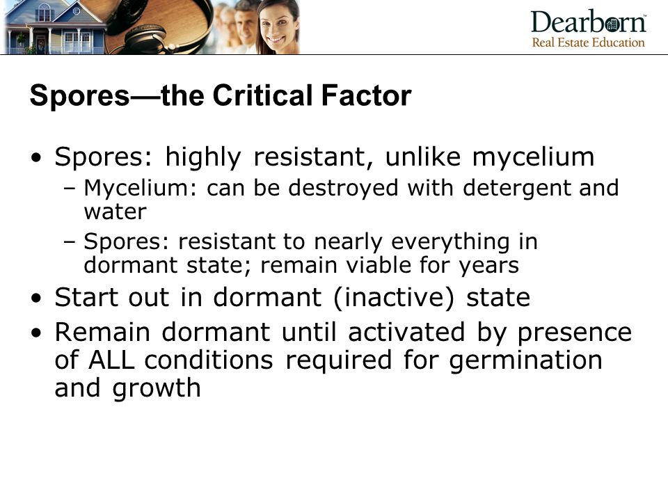 Spores—the Critical Factor Spores: highly resistant, unlike mycelium –Mycelium: can be destroyed with detergent and water –Spores: resistant to nearly everything in dormant state; remain viable for years Start out in dormant (inactive) state Remain dormant until activated by presence of ALL conditions required for germination and growth