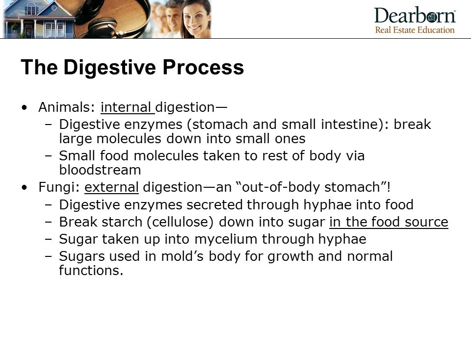 The Digestive Process Animals: internal digestion— –Digestive enzymes (stomach and small intestine): break large molecules down into small ones –Small food molecules taken to rest of body via bloodstream Fungi: external digestion—an out-of-body stomach .