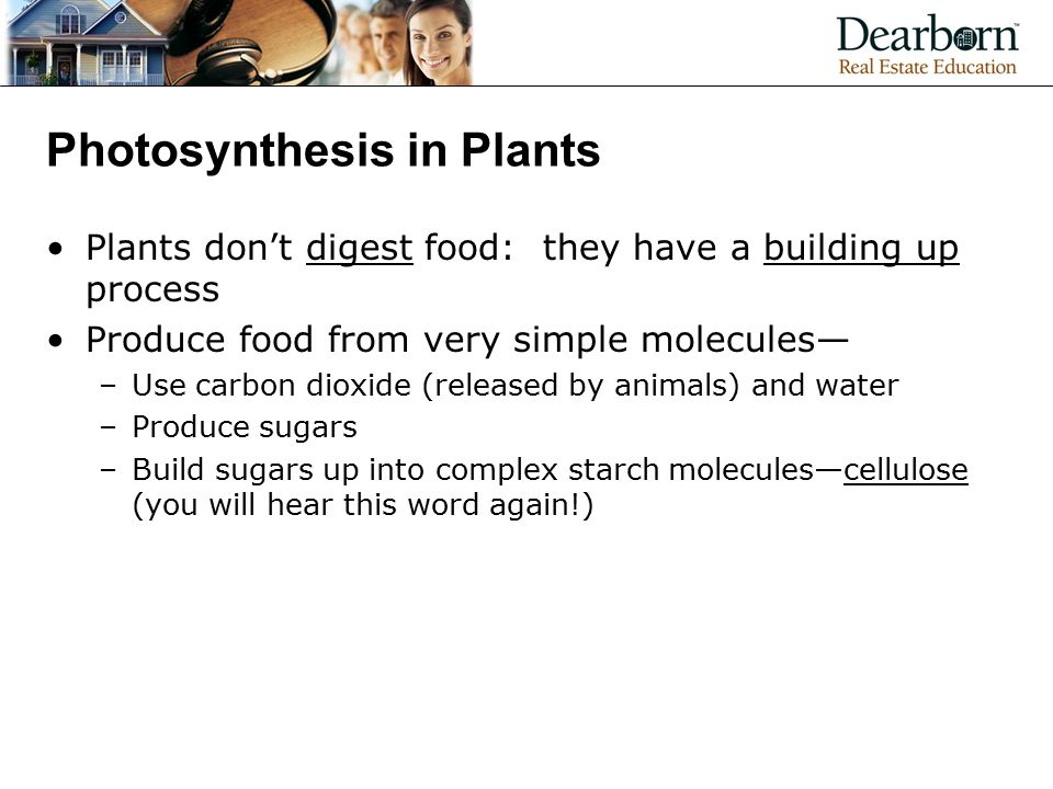 Photosynthesis in Plants Plants don't digest food: they have a building up process Produce food from very simple molecules— –Use carbon dioxide (released by animals) and water –Produce sugars –Build sugars up into complex starch molecules—cellulose (you will hear this word again!)