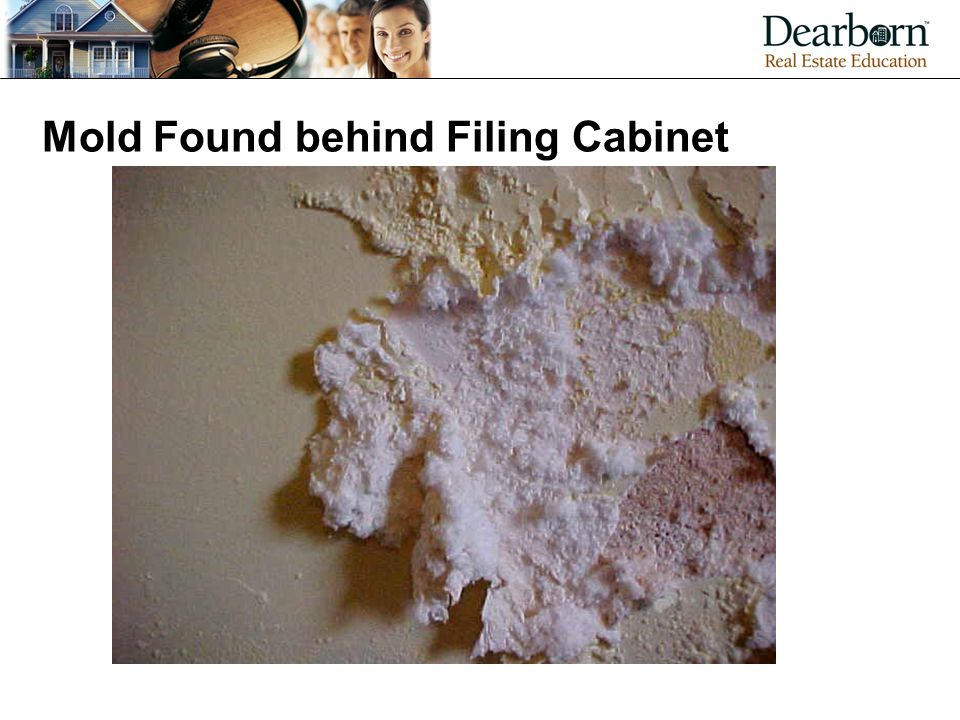 Mold Found behind Filing Cabinet