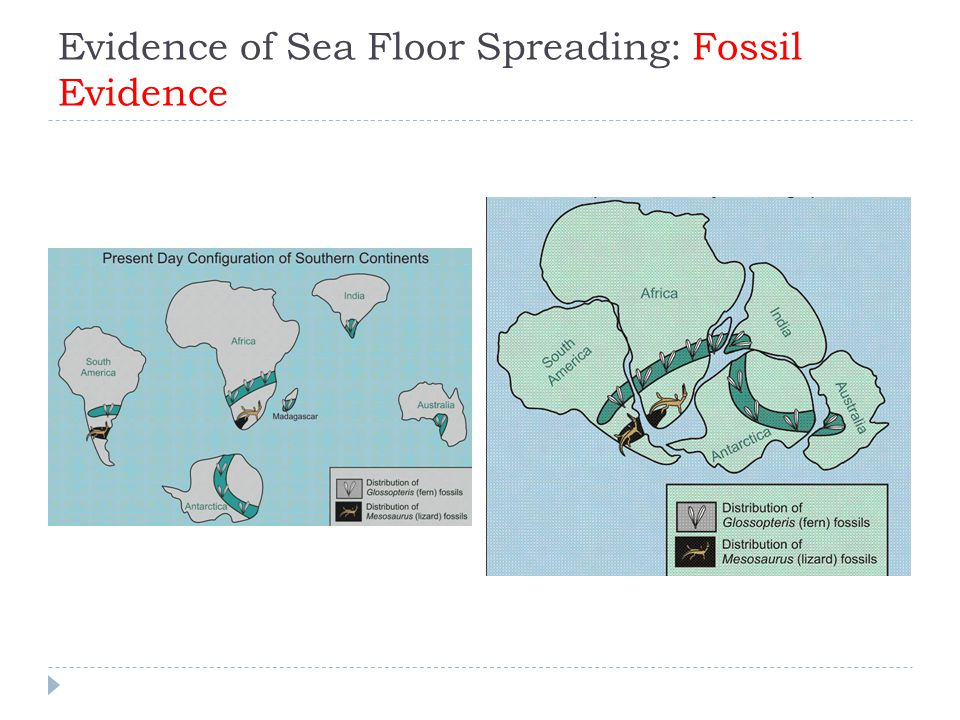 Evidence of Sea Floor Spreading: Fossil Evidence