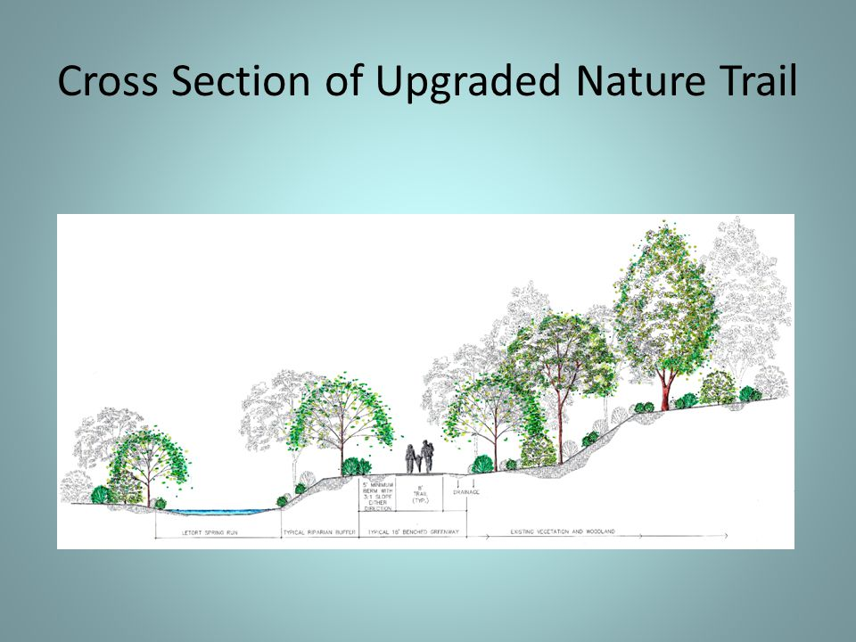 Cross Section of Upgraded Nature Trail