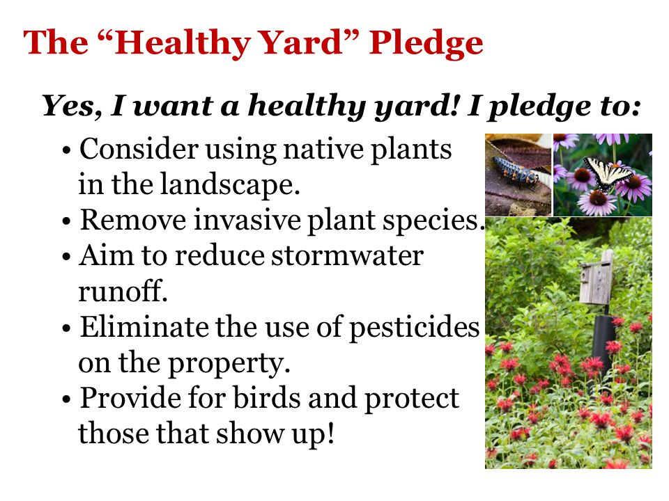 The Healthy Yard Pledge Yes, I want a healthy yard.