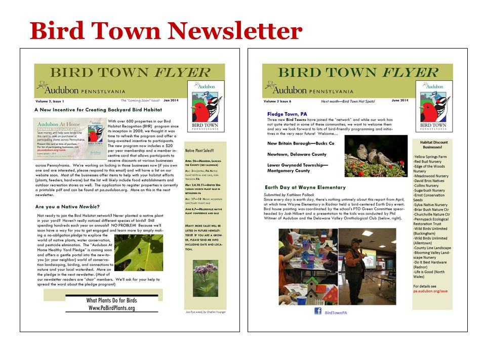 Bird Town Newsletter