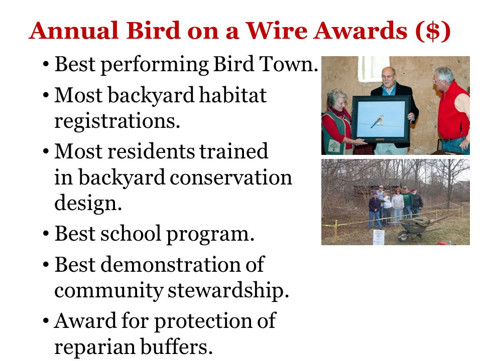 Annual Bird on a Wire Awards ($) Best performing Bird Town.