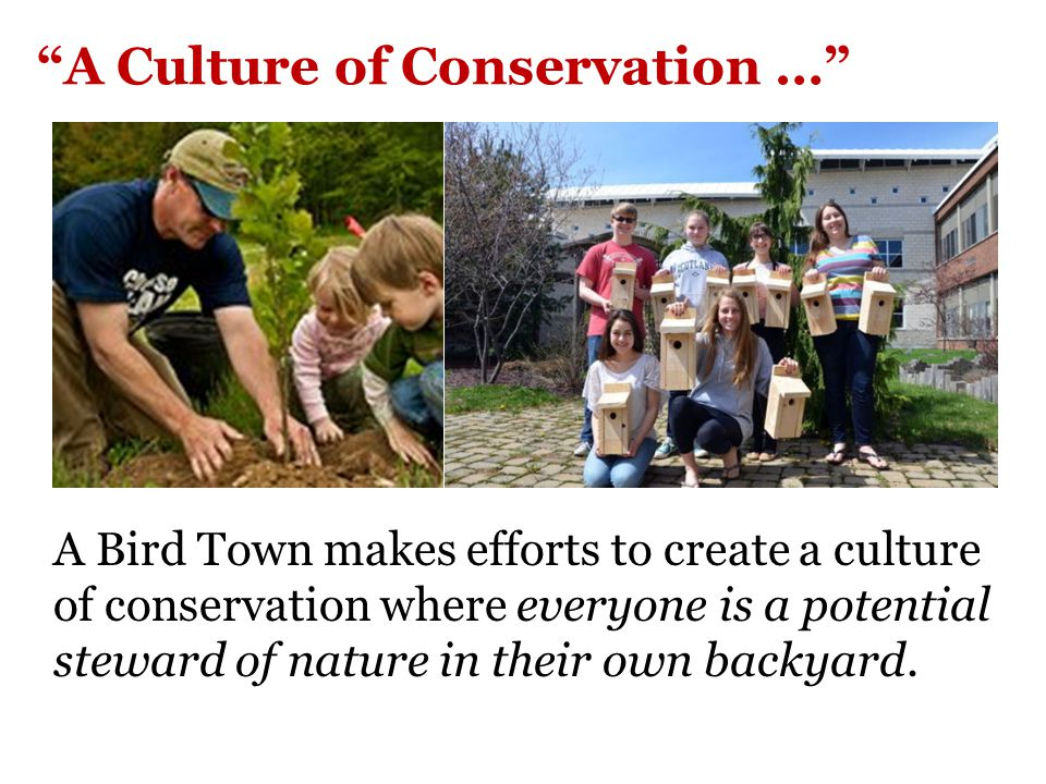 Bird Town Program Goals: Encourage residents to learn about and use more native plants on their properties.