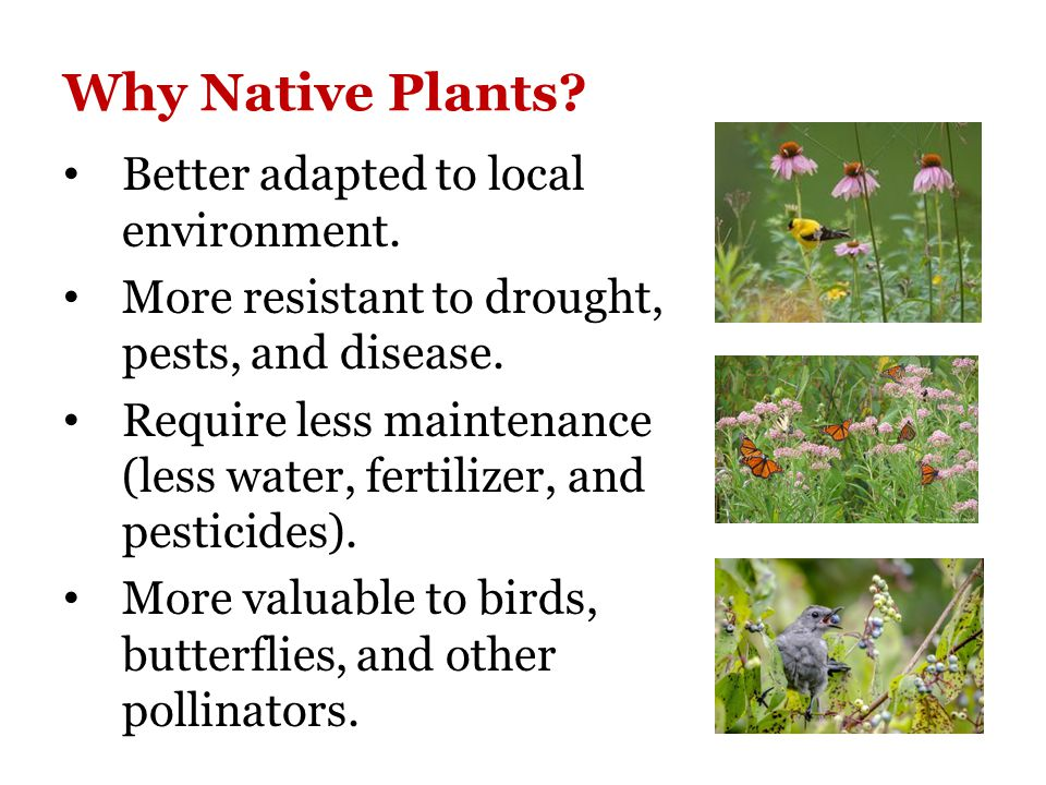 Why Native Plants. Better adapted to local environment.