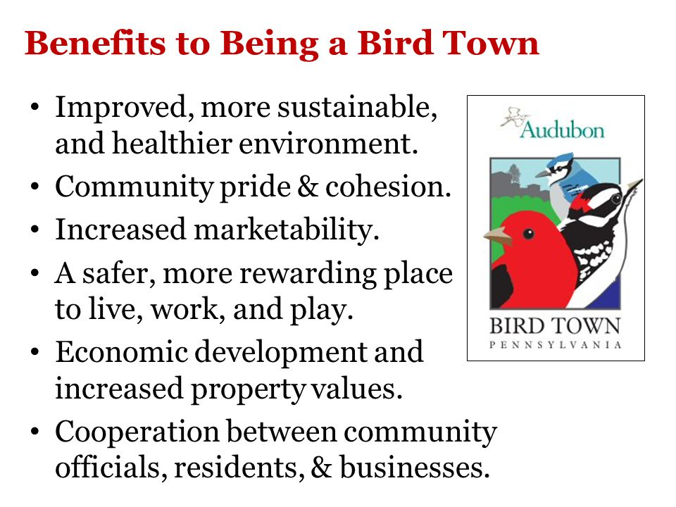 Bird Town Newsletter
