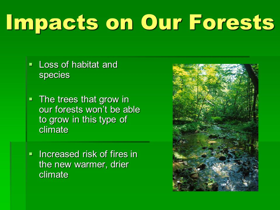 Impacts on Our Forests  Loss of habitat and species  The trees that grow in our forests won't be able to grow in this type of climate  Increased risk of fires in the new warmer, drier climate
