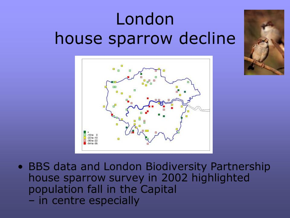 London house sparrow decline BBS data and London Biodiversity Partnership house sparrow survey in 2002 highlighted population fall in the Capital – in centre especially