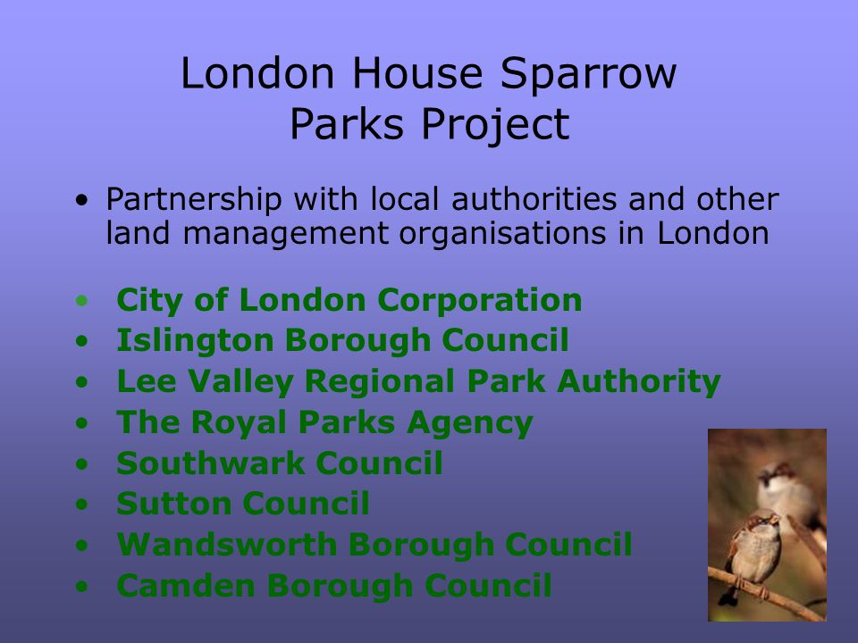 London House Sparrow Parks Project Partnership with local authorities and other land management organisations in London City of London Corporation Islington Borough Council Lee Valley Regional Park Authority The Royal Parks Agency Southwark Council Sutton Council Wandsworth Borough Council Camden Borough Council