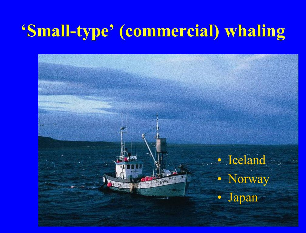 'Small-type' (commercial) whaling Iceland Norway Japan