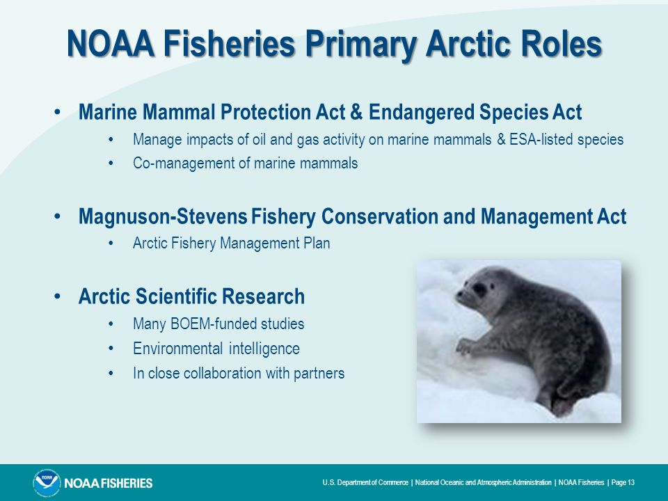 U.S. Department of Commerce | National Oceanic and Atmospheric Administration | NOAA Fisheries | Page 13 Marine Mammal Protection Act & Endangered Spe